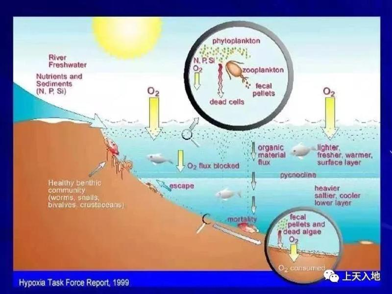 缺氧会导至海洋生物再次灭绝吗?